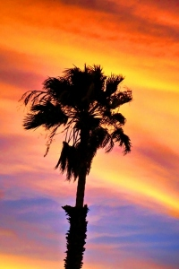 Sunset in Palm Springs, CA