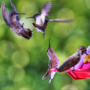 Hummers on the move