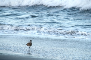 Lone on the Beach