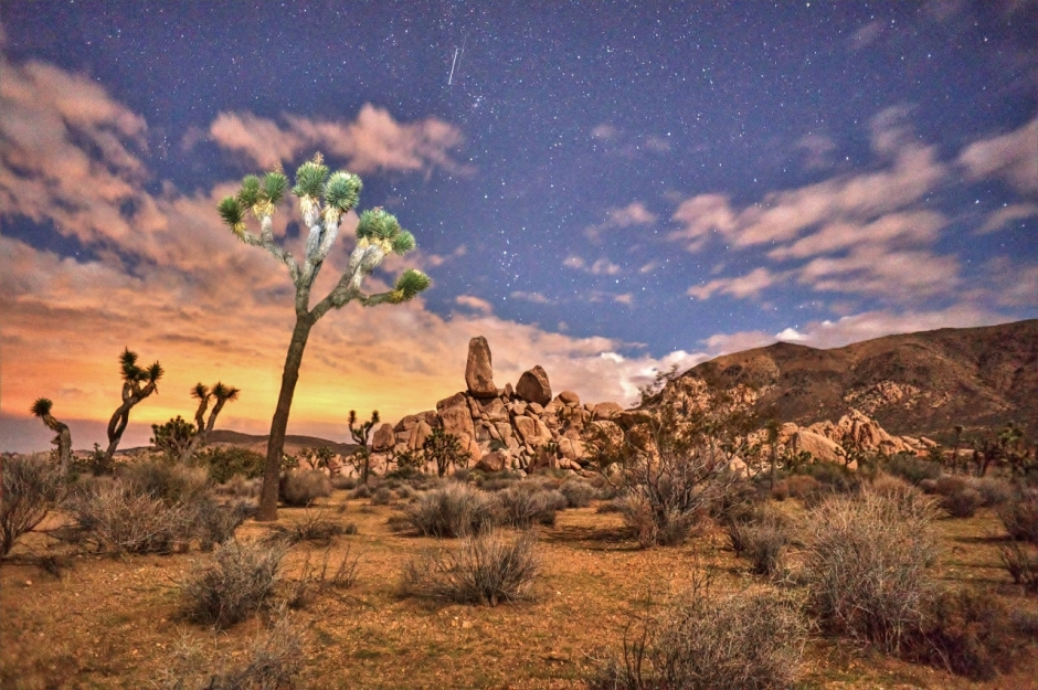 Joshua Tree Starlit Night